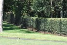 Ainslie NSW Wire fencing 15